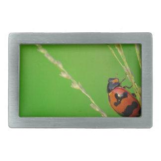 close up photo of ladybird with natural green back rectangular belt buckles