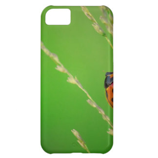 close up photo of ladybird with natural green back cover for iPhone 5C