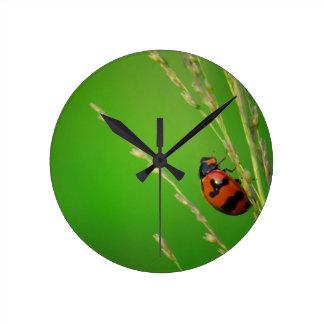 close up photo of ladybird with natural green back wallclocks