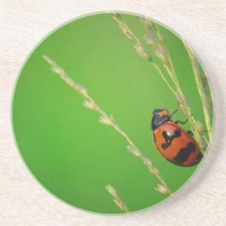 close up photo of ladybird with natural green back beverage coaster