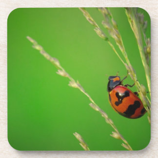 close up photo of ladybird with natural green back coaster