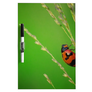 close up photo of ladybird with natural green back dry erase whiteboards