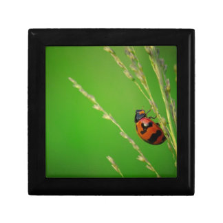 close up photo of ladybird with natural green back jewelry box