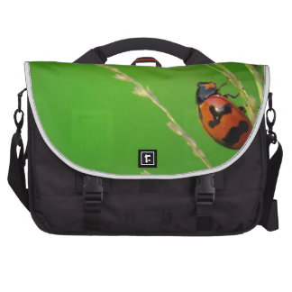 close up photo of ladybird with natural green back bags for laptop
