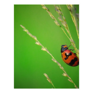 close up photo of ladybird with natural green back letterhead design