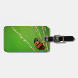 close up photo of ladybird with natural green back tag for bags