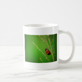 close up photo of ladybird with natural green back coffee mugs