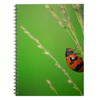 close up photo of ladybird with natural green back spiral notebooks