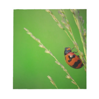 close up photo of ladybird with natural green back note pads