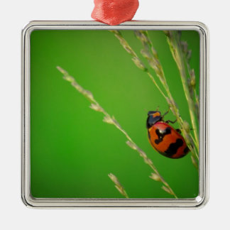 close up photo of ladybird with natural green back ornament