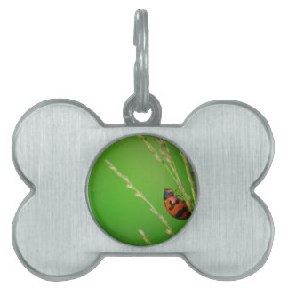 close up photo of ladybird with natural green back pet name tag