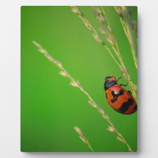 close up photo of ladybird with natural green back photo plaques