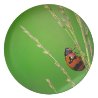 close up photo of ladybird with natural green back dinner plates