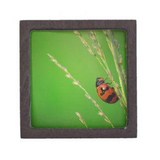 close up photo of ladybird with natural green back premium jewelry boxes