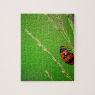 close up photo of ladybird with natural green back puzzles