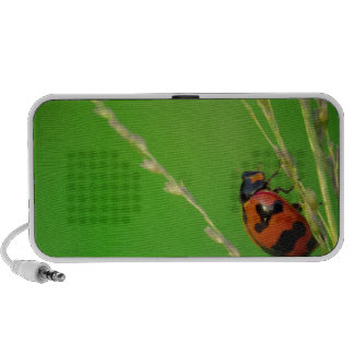 close up photo of ladybird with natural green back speaker