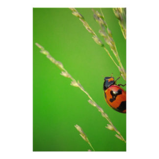 close up photo of ladybird with natural green back customized stationery