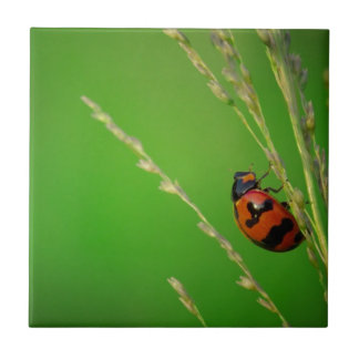 close up photo of ladybird with natural green back tile