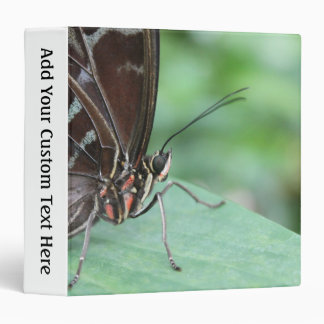 Close Up Picture of a Butterfly. 3 Ring Binder