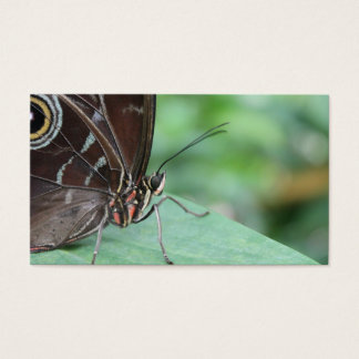 Close Up Picture of a Butterfly. Business Card