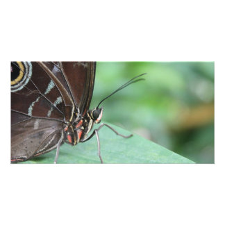 Close Up Picture of a Butterfly. Picture Card