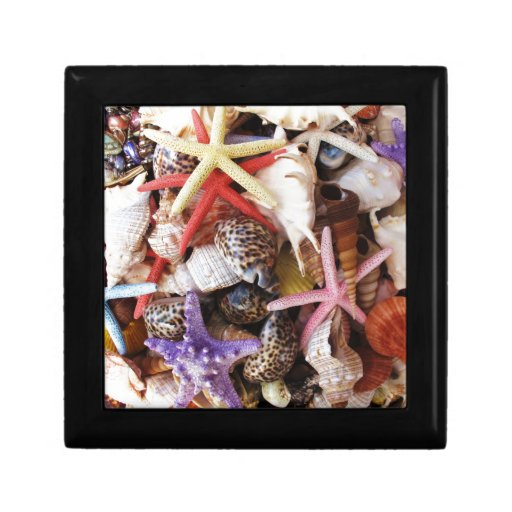 Close Up Picture of Sea Shell ans Starfish Photo Jewelry Boxes