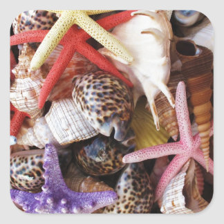 Close Up Picture of Sea Shell ans Starfish Photo Square Sticker
