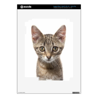Close up portrait of a kitten decals for iPad 3