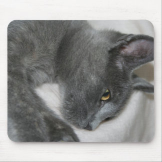 Close Up Portrait Of A Relaxed Grey Cat Mouse Pad