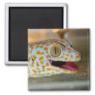 Close up portrait of Tokay gecko in TulaZoo 2 Inch Square Magnet