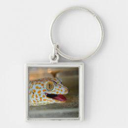 Close up portrait of Tokay gecko in TulaZoo Keychain