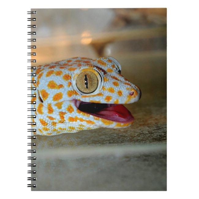 Close up portrait of Tokay gecko in TulaZoo