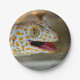 Close up portrait of Tokay gecko in TulaZoo Paper Plate