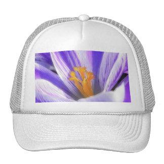 Close Up - Purple Striped Crocus Hat