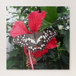 Close up Puzzle: Black White Spotted Butterfly Jigsaw Puzzle