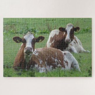 Close Up Puzzle: Two Cute White-Brown Cows Jigsaw Puzzle