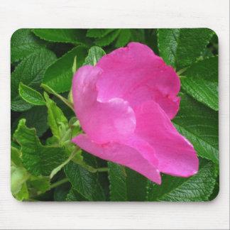 close up rosa rugosa - photograph mouse pad