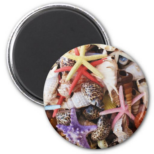 Close Up Sea Shell ans Starfish Photos Refrigerator Magnet