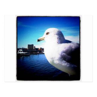 Close up seagull postcard