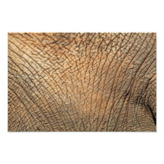 Close-up shot of an Elephant's skin Photo Print