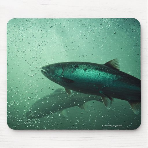 Close up shot of salmon running 2 mouse pad