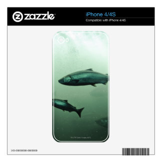 Close up shot of salmon running skin for the iPhone 4