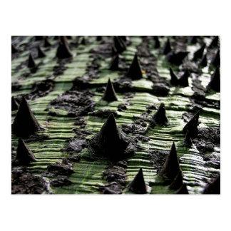 Close up Spiky Kapok Tree Trunk : Funchal Madeira Postcard