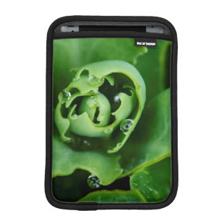 Close-up, succulent plant with water droplets iPad mini sleeves
