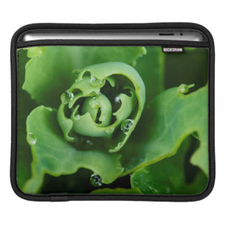 Close-up, succulent plant with water droplets iPad sleeve