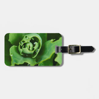 Close-up, succulent plant with water droplets travel bag tag