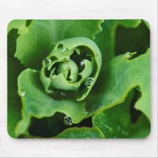 Close-up, succulent plant with water droplets mouse pad