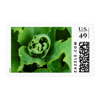 Close-up, succulent plant with water droplets postage stamp