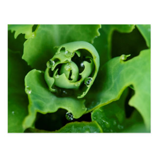 Close-up, succulent plant with water droplets postcard