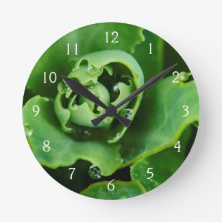Close-up, succulent plant with water droplets round clock